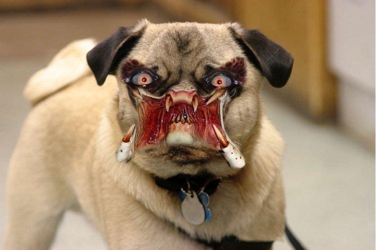 pies predator - te z filmu wyglądają i zachowują się prawie tak samo śmiesznie